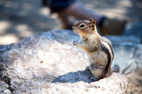 Chipmunk sittin' pretty.