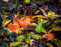 Fallen Leaves.  These leaves were piled in the granite creek at Belle Meadow Plantation.