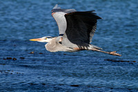 GBH in flight